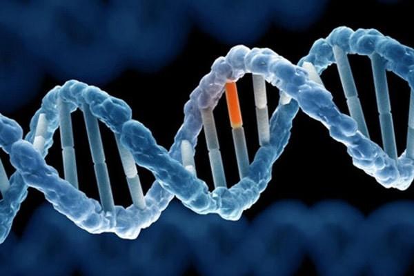 Đột biến trong gen ATP7B trên nhiễm sắc thể 13q14, mã hóa cho sự vận chuyển đồng, gây ra bệnh
