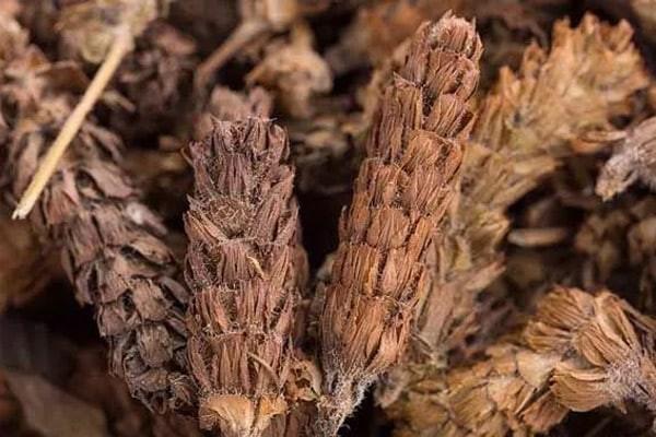 Hạ khô thảo khô
