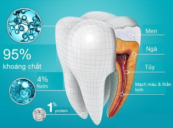 men răng