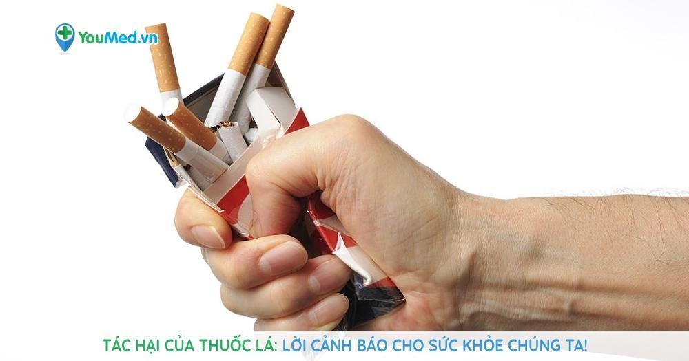 Tác hại của thuốc lá: Lời cảnh báo cho sức khỏe chúng ta!