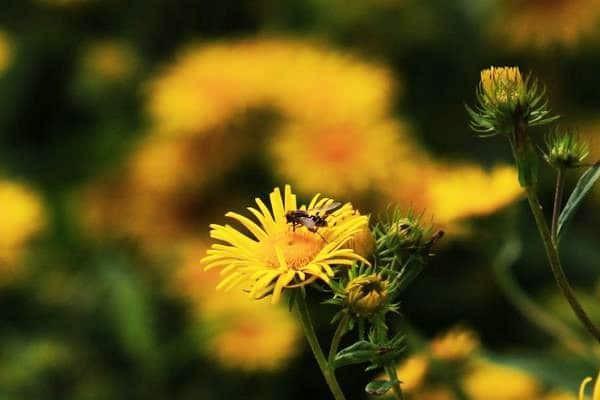 Toàn phúc hoa