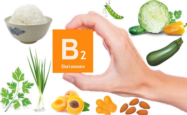 Vitamin B2 và B3