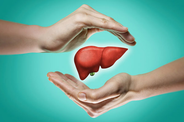Đây là vị thuốc quý với nhiều tác dụng cho gan