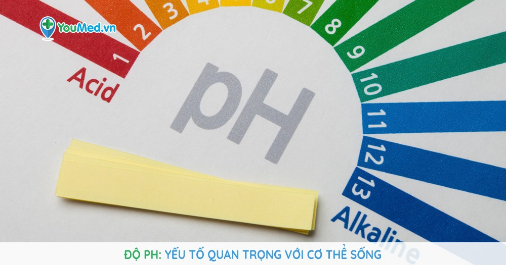 Độ pH - Yếu tố quan trọng với cơ thể sống
