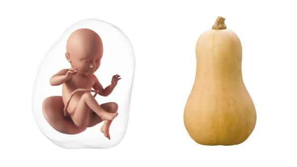 Vào tuần thứ 34, bé có kích thước khoảng 44 cm và nặng khoảng 2300 gram