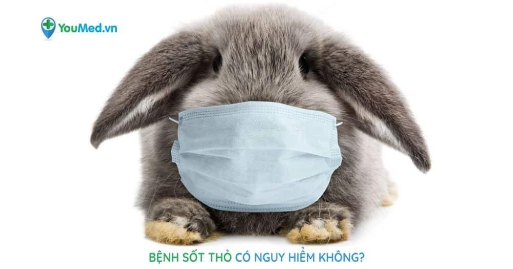 Bệnh sốt thỏ có nguy hiểm không?