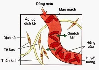 Cơ chế khuếch tán