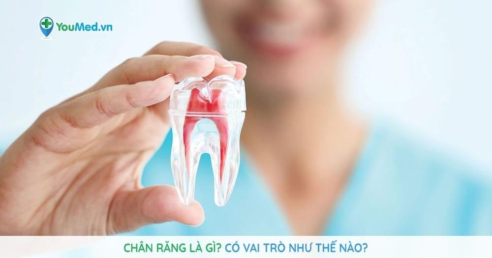 Chân răng là gì? Có vai trò như thế nào?