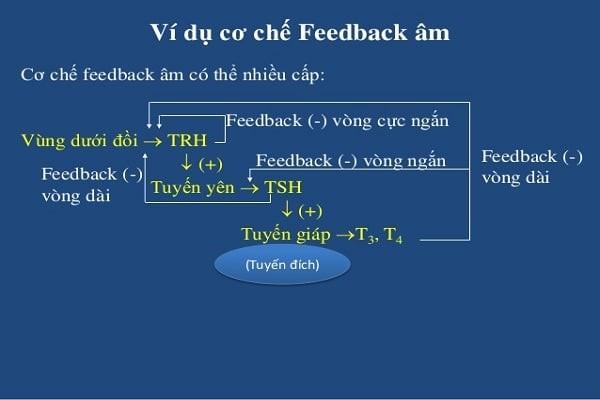 Cơ chế feedback của cơ thể