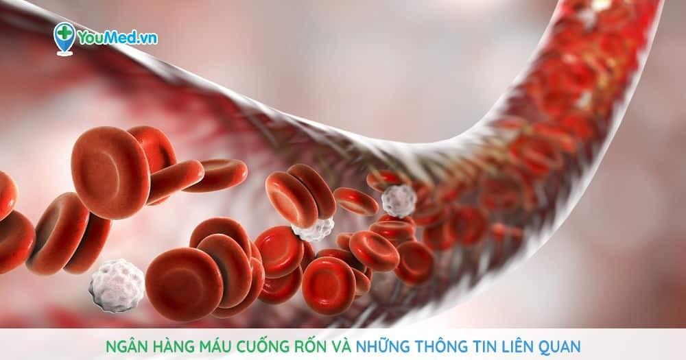 Ngân hàng máu cuống rốn và những thông tin liên quan