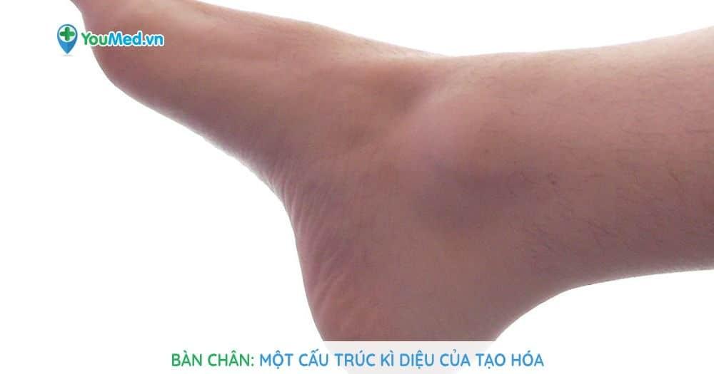 Bàn chân: Một cấu trúc kì diệu của tạo hóa