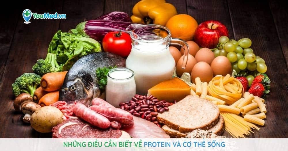 Protein và cơ thể sống