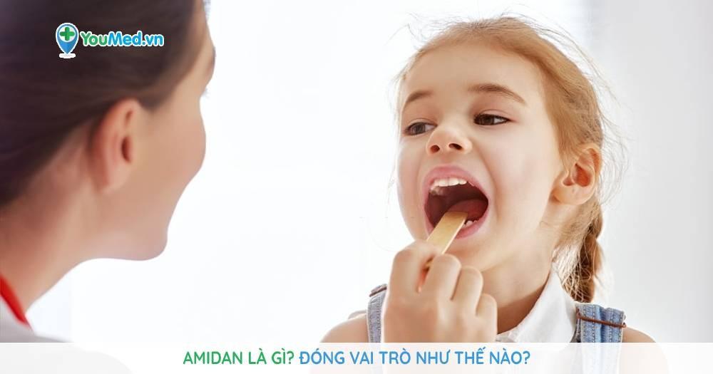 Amidan là gì? Đóng vai trò như thế nào?