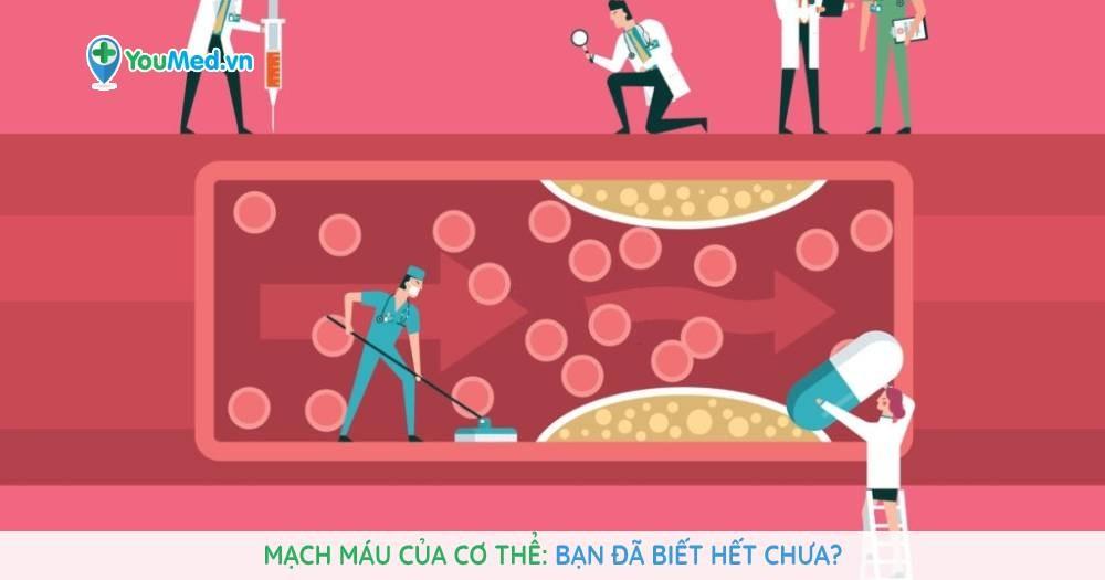 Mạch máu của cơ thể: Bạn đã biết hết chưa?