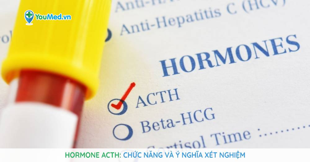 Hormone ACTH: chức năng và ý nghĩa xét nghiệm