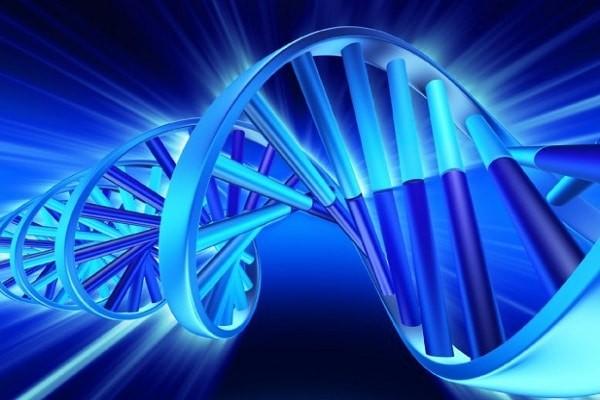 Lông mày mang tính di truyền