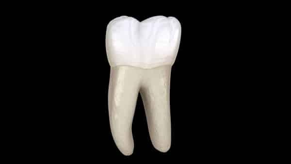 Răng cối thứ nhất hàm dưới