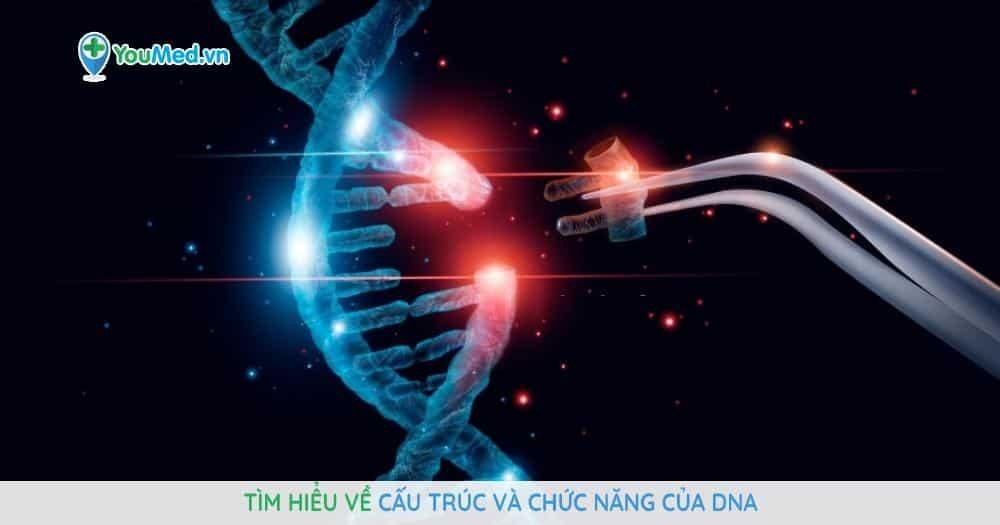Tìm hiểu về cấu trúc và chức năng của DNA