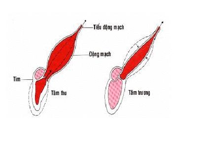 Tính đàn hồi động mạch