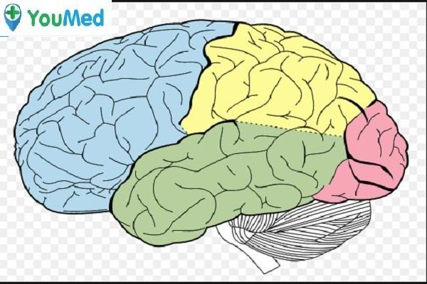 Vùng vỏ não Rhinal cortex