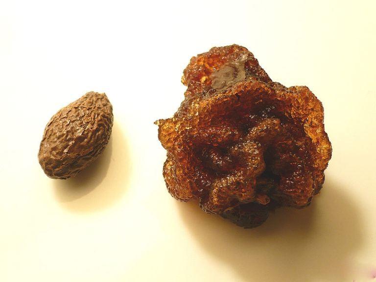 Hạt An nam tử đã nở sau khi ngâm (bên phải)
