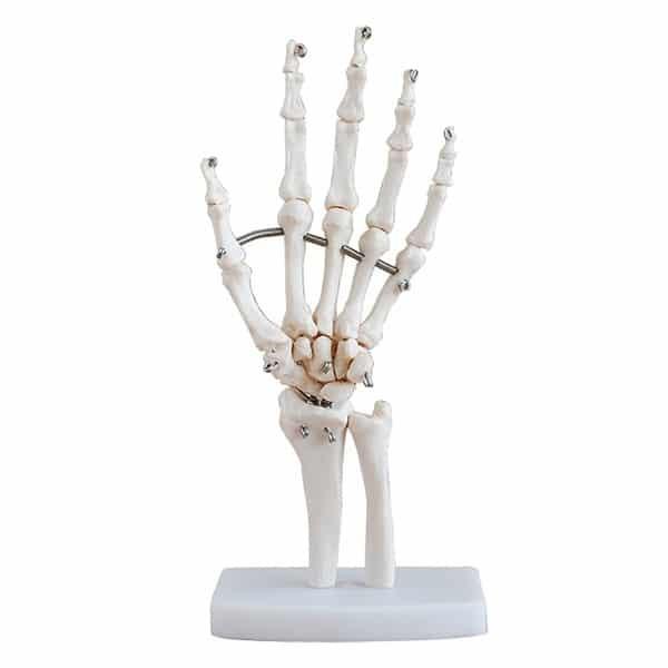xương bàn tay