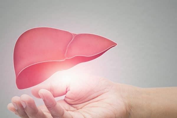Vị thuốc có tác dụng tốt cho gan