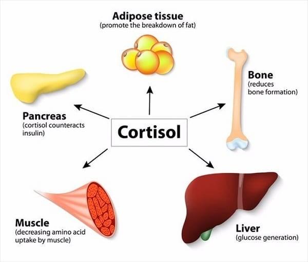 Tác dụng cortisol