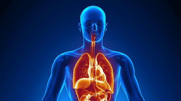 Hội chứng Sjogren có thể ảnh hưởng đến nhiều cơ quan trong cơ thể