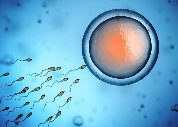 Số lượng, hình dạng và khả năng di động của tinh trùng là các yếu tố ảnh hưởng đến việc thụ thai