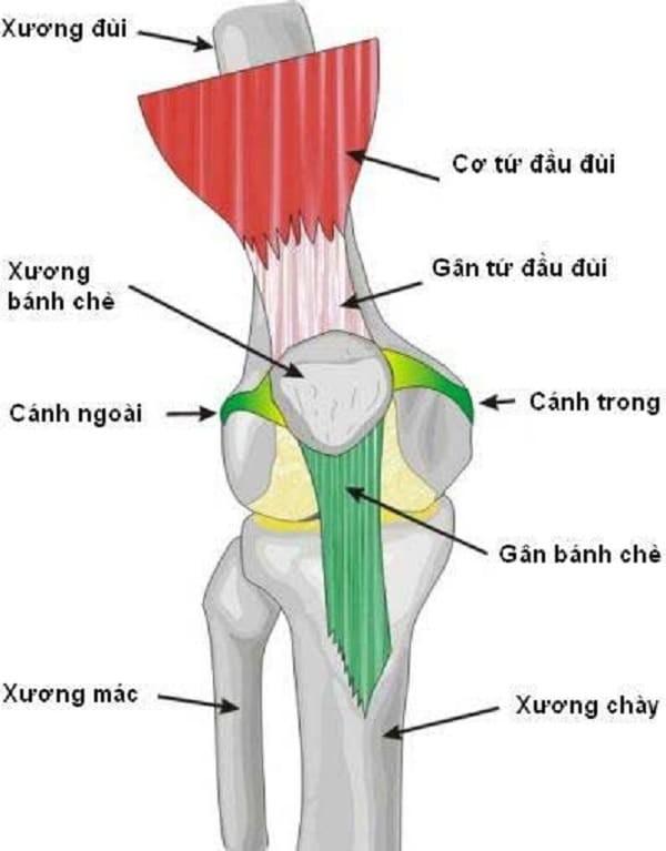 Hội chứng xương bánh chè