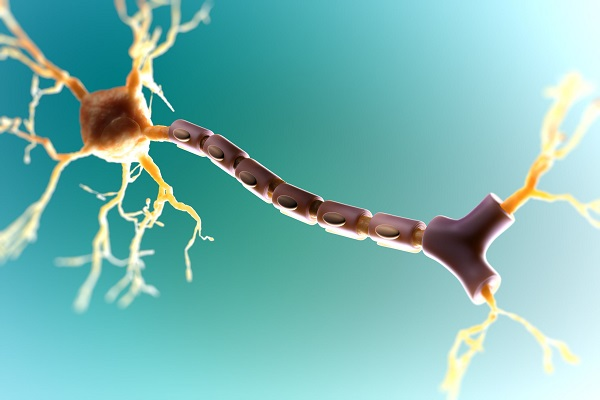 Tế bào thần kinh với bao myelin