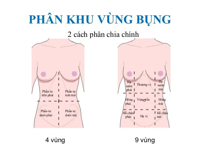 phân khu vùng bụng