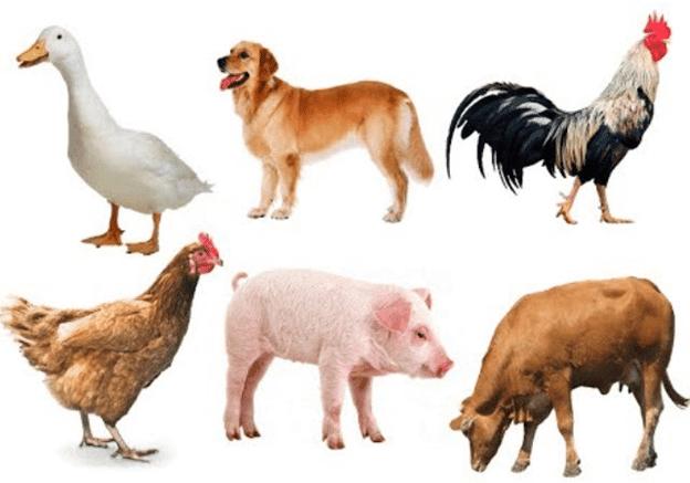 Sức khỏe và sự an toàn của con người và động vật có nguy cơ bị đe dọa.