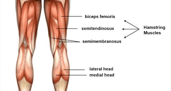 Nhóm cơ đùi sau (nhóm cơ hamstring)