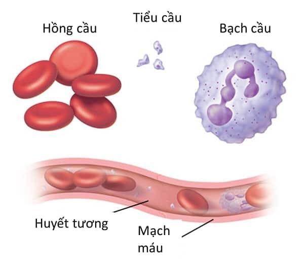 Các loại tế bào máu