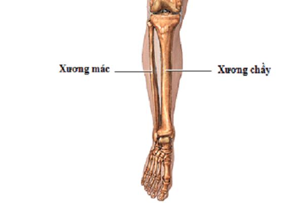 Vị trí của xương mác