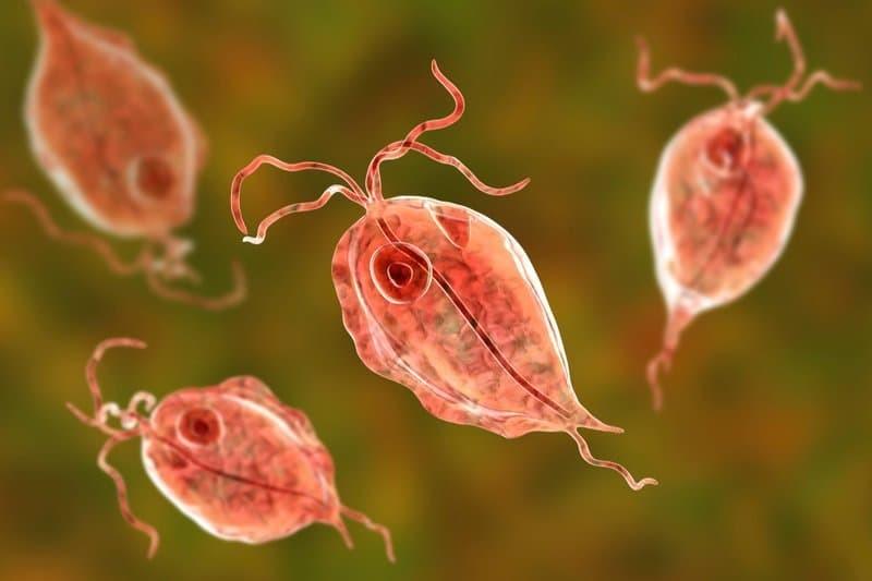 Nhiễm Trichomonas gây sưng môi lớn