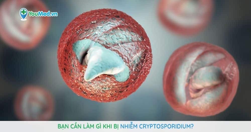 Bạn cần làm gì khi bị nhiễm Cryptosporidium?