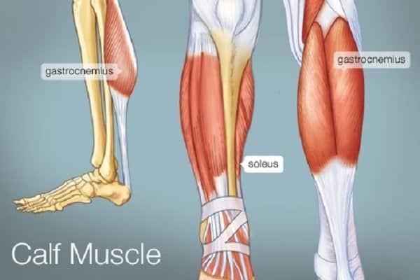 Các cơ ở bắp chân - bắp chân to cơ