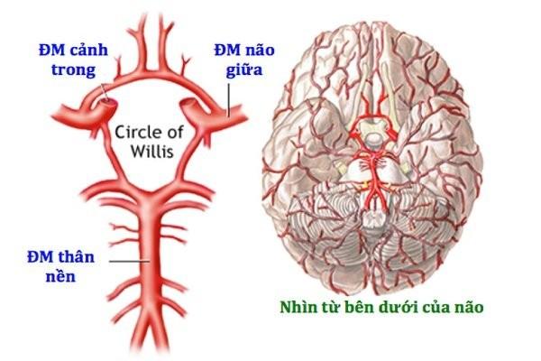 Động mạch não giữa
