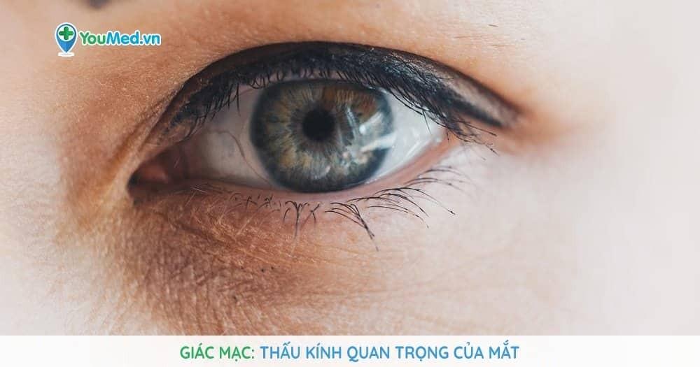 Giác mạc: Thấu kính quan trọng của mắt