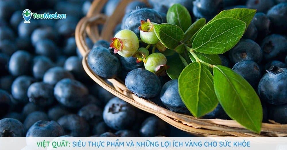Việt quất - Siêu thực phẩm và những lợi ích vàng cho sức khỏe