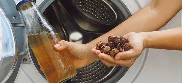 Quả Bồ hòn được dùng thay thế xà phòng để giặt quần áo.