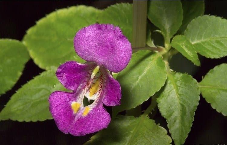 Hoa của cây có nhiều màu sắc