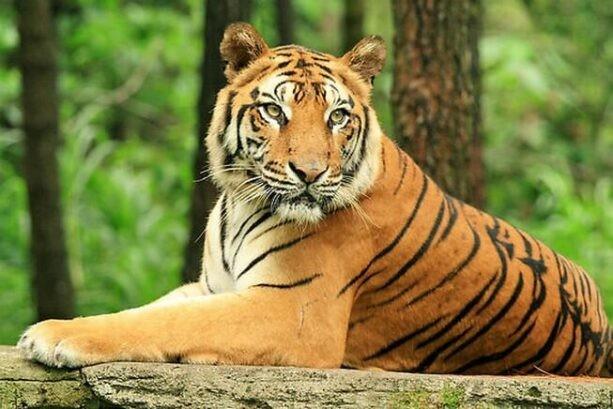 Hổ là loài động vật quý hiếm trên thế giới
