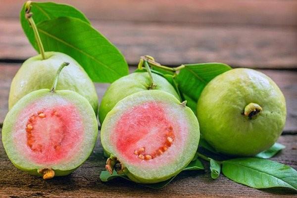 Ổi là loại cây chứa nhiều vitamin và khoáng chất bổ dưỡng