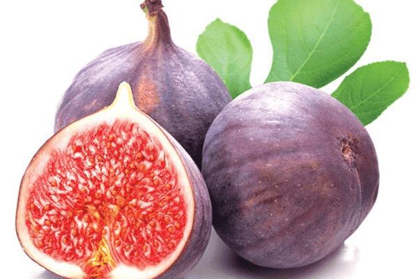 Quả Vả chứa nhiều chất dinh dưỡng