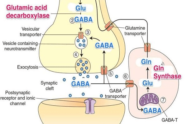 Chất GABA trong não