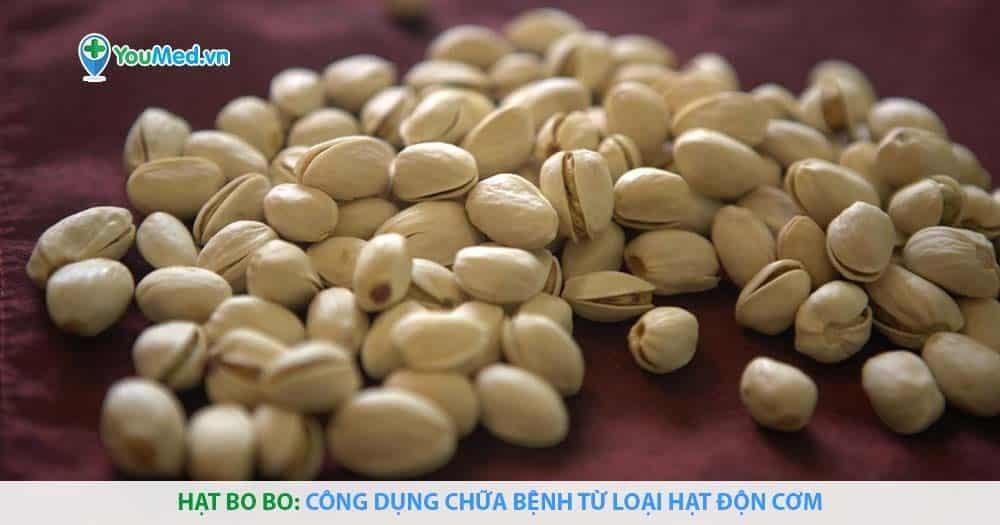 Hạt bo bo: Công dụng chữa bệnh từ loại hạt độn cơm